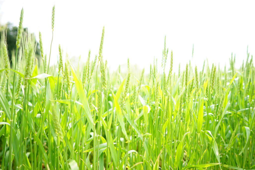 用卡尔蔡司Batis2/25镜头和索尼SONYα单反相机拍的照片样张